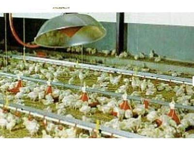 Açık Alevli Radyant Isıtıcı / Khromschroeder 1000 Bp/Hp
