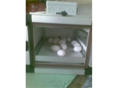 30_yumurtalik_otomatik_nemlendirmeli_cikim_makinasi-3.jpg