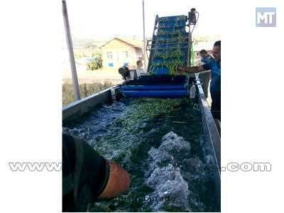 Sebze Yıkama Makinesi 2000 kg/ saat