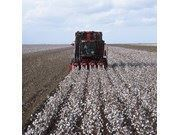 Pamuk Hasat Makinesi / Case Ih 2022 Cotton Express